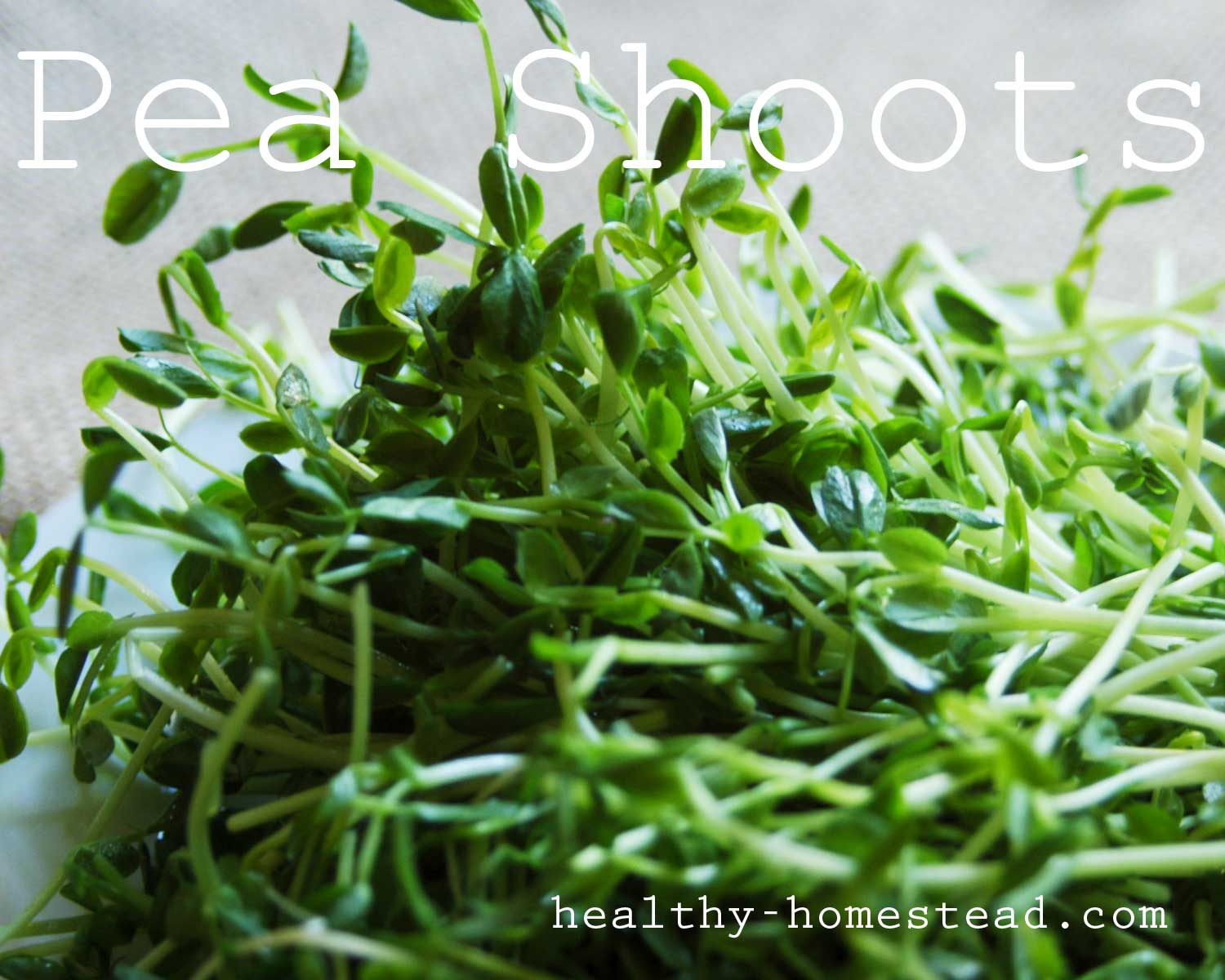 pea shoots…5 reasons to love them!